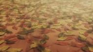Зимняя соната  / Winter Sonata (Ёон Сук-хо) [TV] [01-26 из 26] [С хардсабом] [RUS(int), KOR] [2009 г., романтика, драма, школа, HDTV-Rip]
